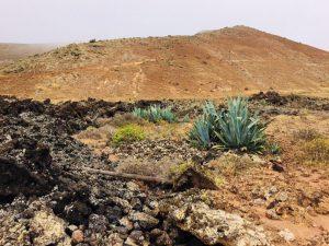 Lanzarote - Caldera Blanca