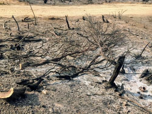 Shořelá krajina