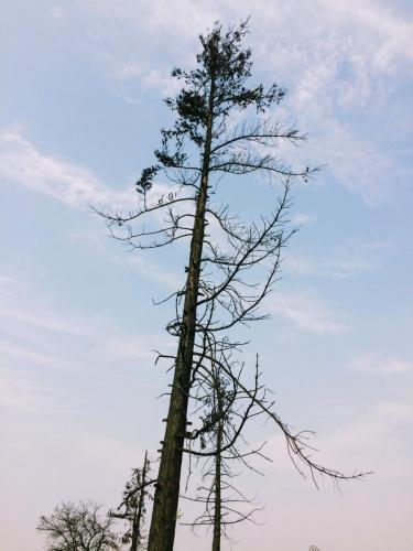 Shořelý strom